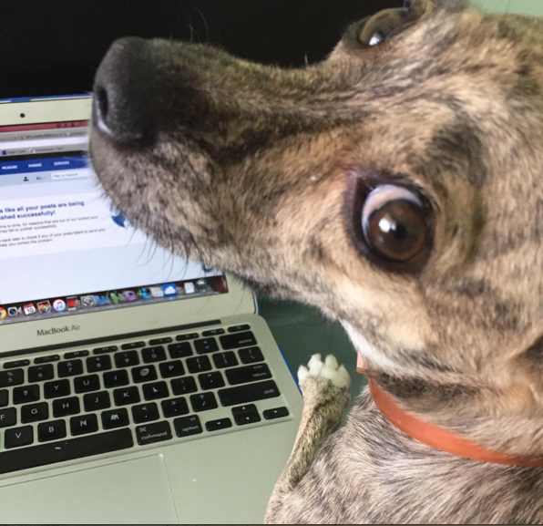 As much as Dobby enjoys helping me work, she lacks the skills to send me emails while I'm on the road.
