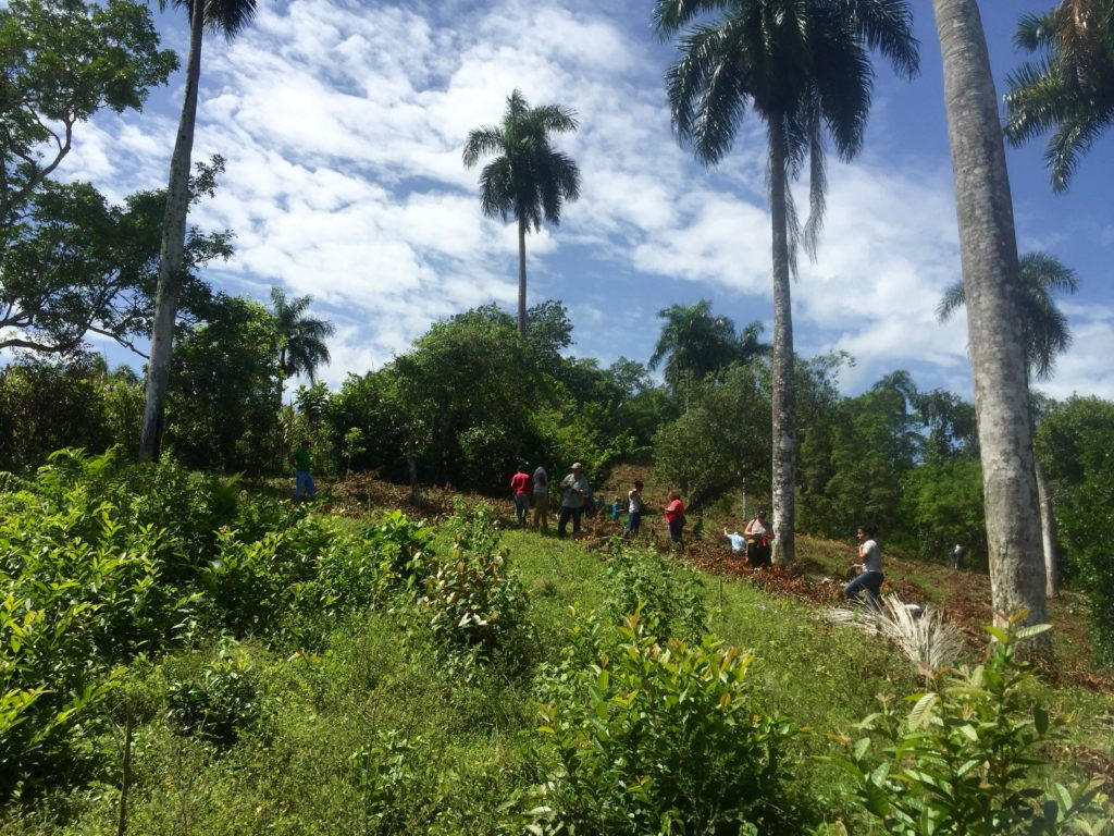 reforestation in dominican republic